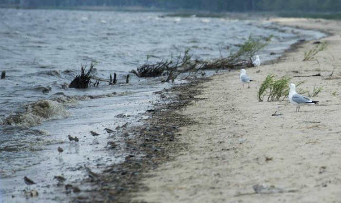 South Linwood Beach reopens after closing for high bacteria levels